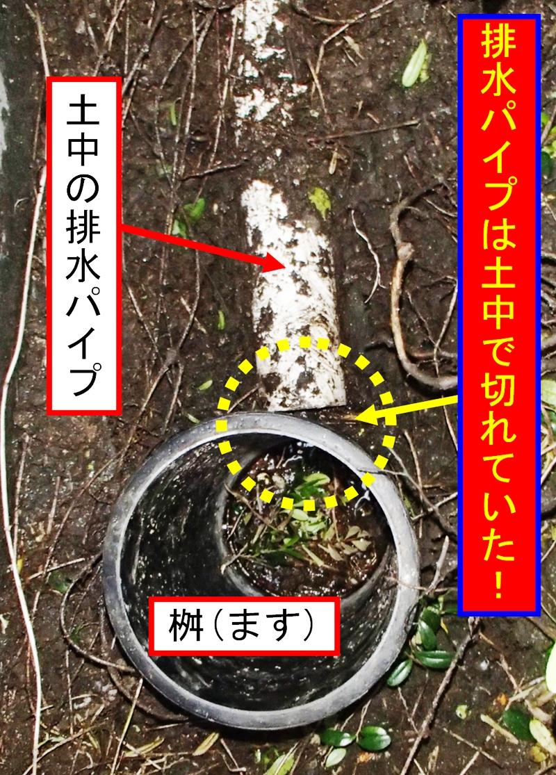 shokusai04